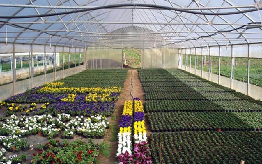 Cvjetna budućnost – Flora Future
