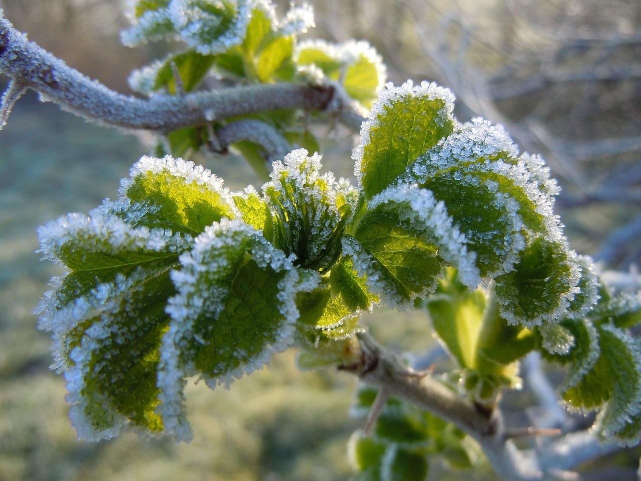 Župan proglasio elementarnu nepogodu uzrokovanu mrazom