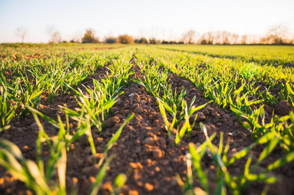 """Objavljen natječaj za poljoprivrednike: """"Želja nam je pomoći i omogućiti jednostavniju svakodnevicu"""""""